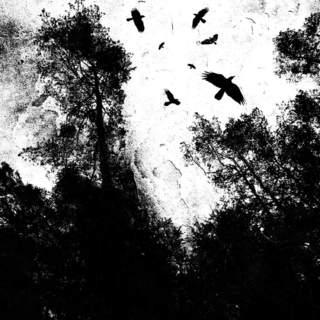 AUTUMN'S DAWN - Autumn's Dawn, MLP